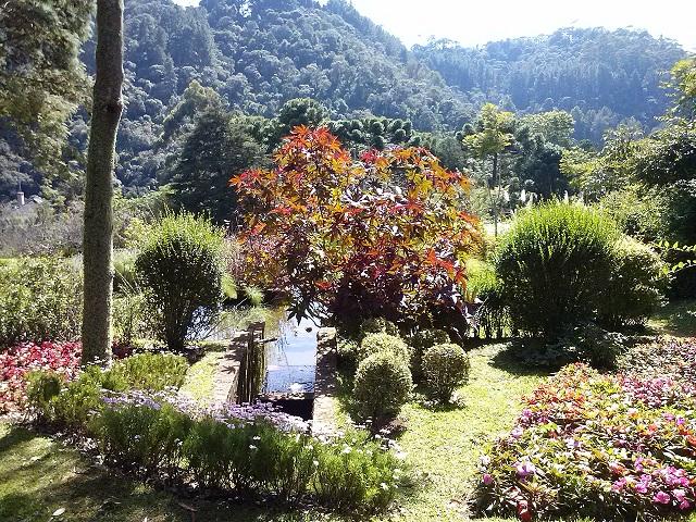 Jardim amantikir for Coniferas de jardin